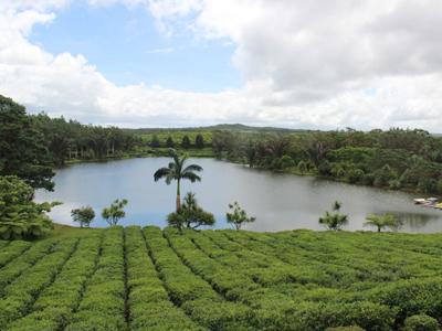 Musée du thé
