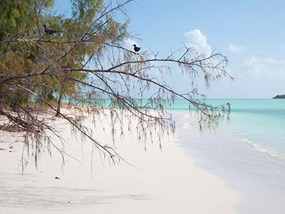 île aux Cocos, la plus exotique