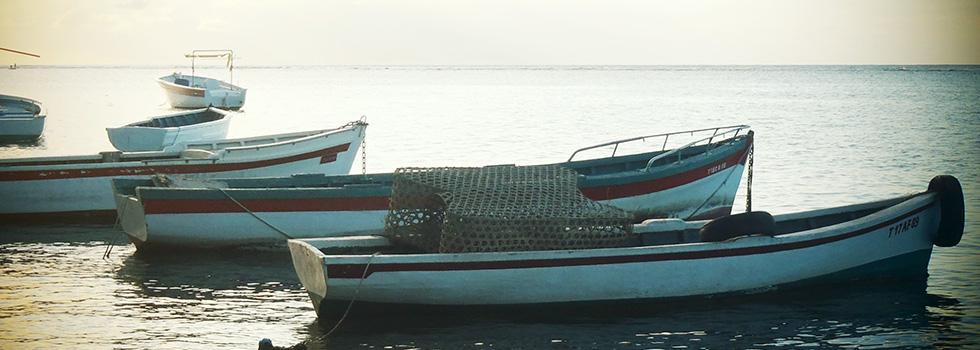 île Maurice : Les Cocotiers