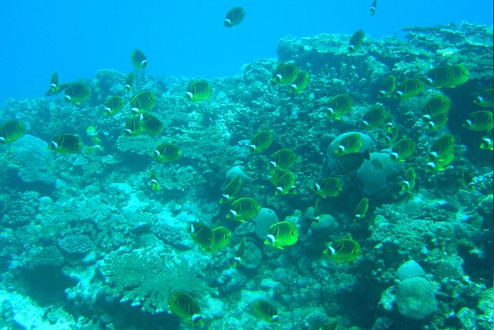 Plongée Belle Mare