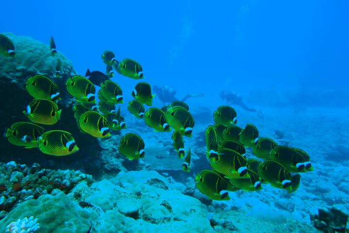 Plongée Les îles du Nord à l'Ile Maurice