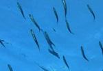 Spot de plongée l'Aquarium La Colline