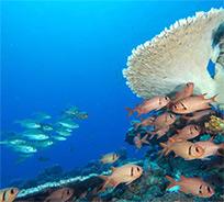 Plonger à l'île Maurice