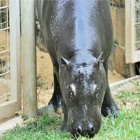 Luna est âgée de 2 ans et demi et pèsera bientôt 275 kilos