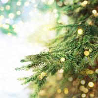 Noël avec les hôtels Constance