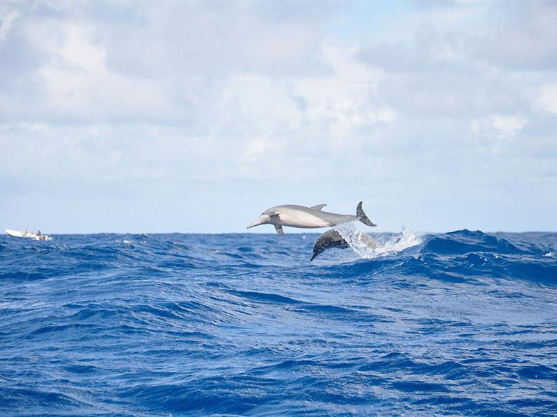 Nager avec les dauphins à l'île Maurice