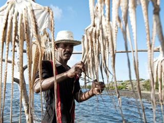 Découvrir l'île Rodrigues