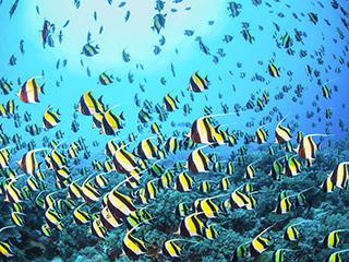 La plongée à Rodrigues